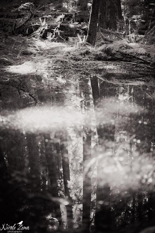 Opal creek-24